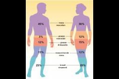 Esame di impedenziometria corporea